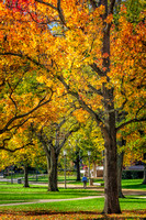 University of Illinois Quad in Fall